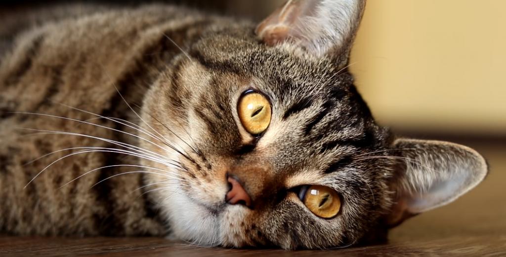 Was frisst eine Katze?