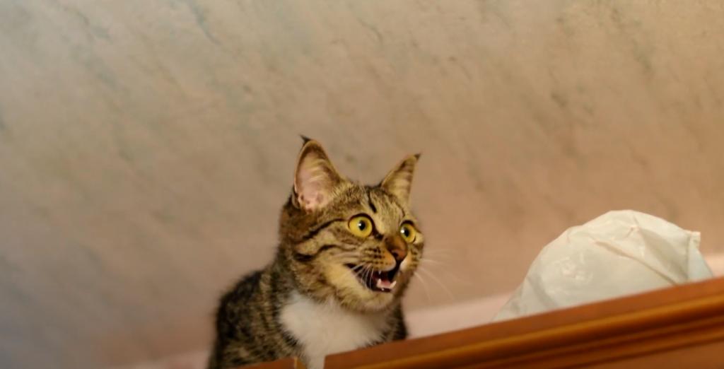 Gesunde Ernährung – gesunde Katzenzähne