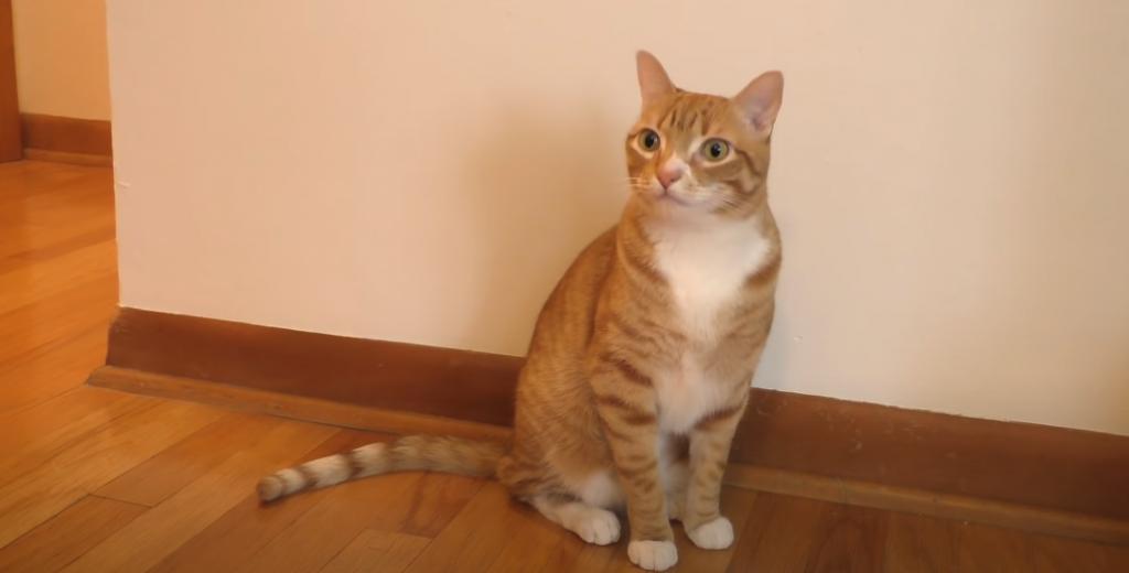 Wichtige Tipps für Zahnpflege der Katze