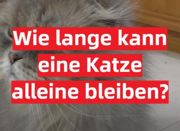 Wie lange kann eine Katze alleine bleiben
