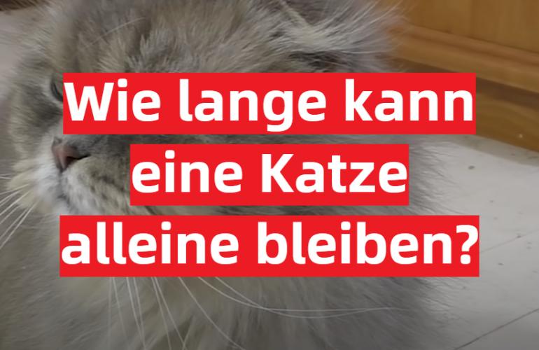 Wie lange kann eine Katze alleine bleiben?