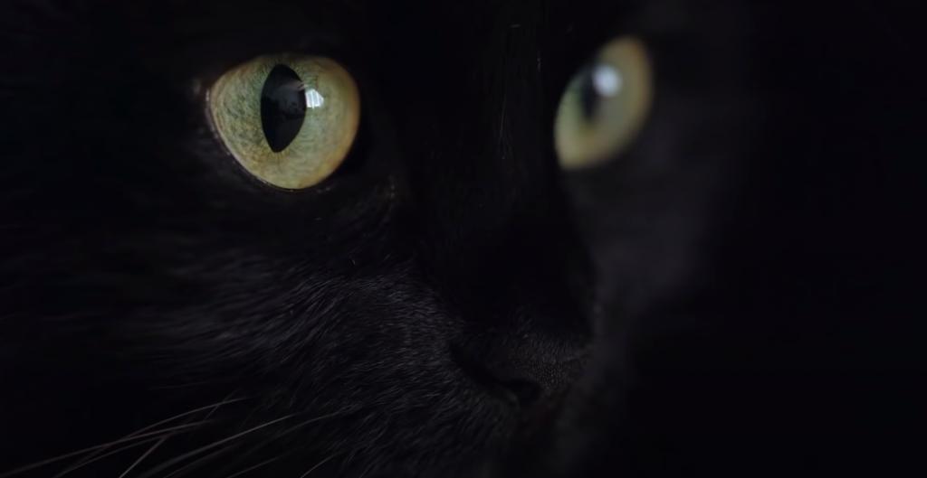 Wie sieht eine Katze?