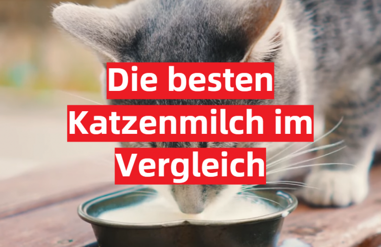 Katzenmilch Test 2021: Die besten 5 Katzenmilch im Vergleich