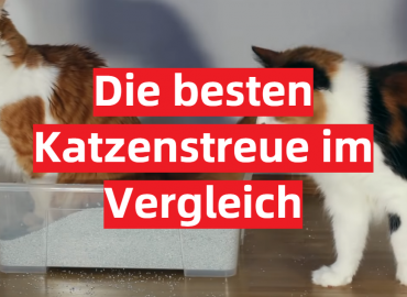 Katzenstreu Test 2021: Die besten 5 Katzenstreue im Vergleich