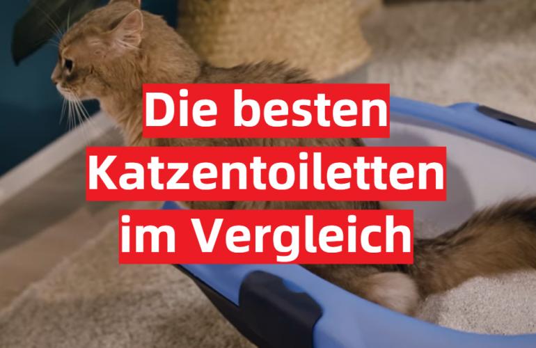 Katzentoilette Test 2021: Die besten 5 Katzentoiletten im Vergleich