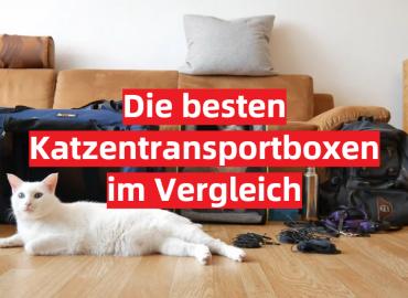 Die besten Katzentransportboxen im Vergleich