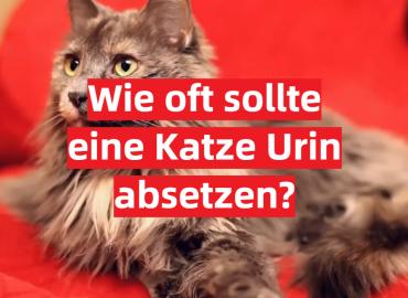 Wie oft sollte eine Katze Urin absetzen?