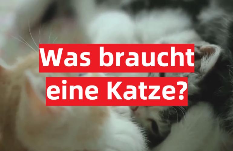 Was braucht eine Katze?