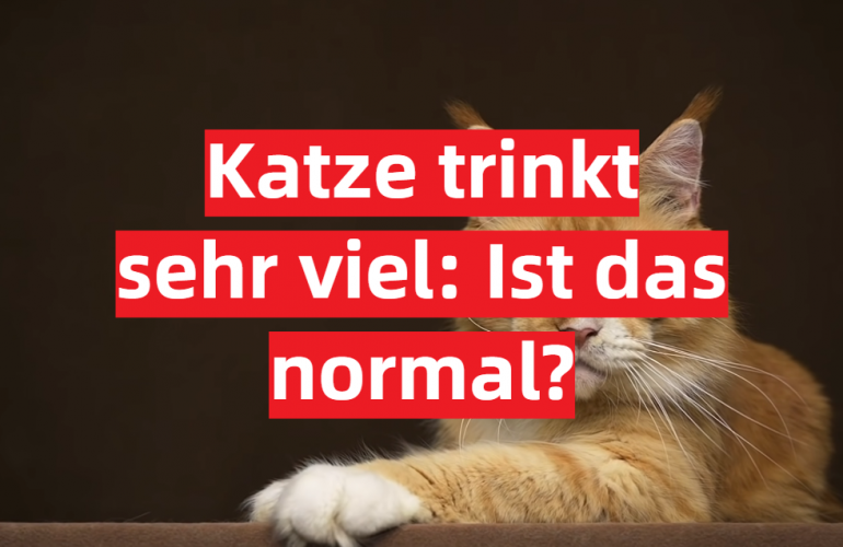 Katze trinkt sehr viel: Ist das normal?