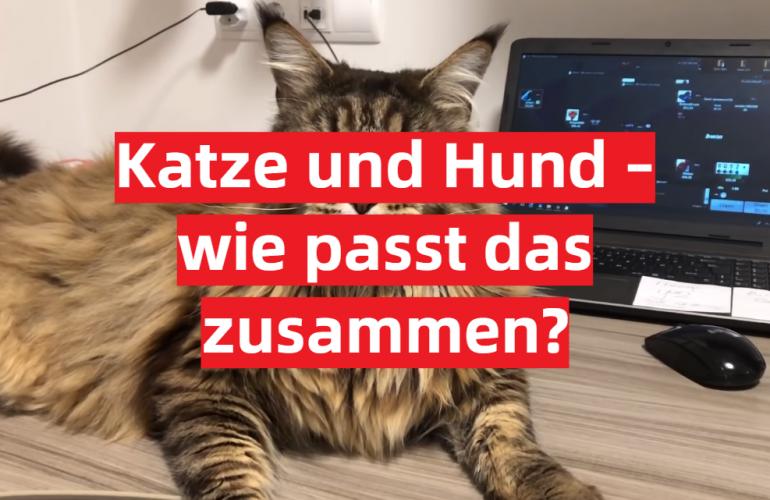 Katze und Hund – wie passt das zusammen?